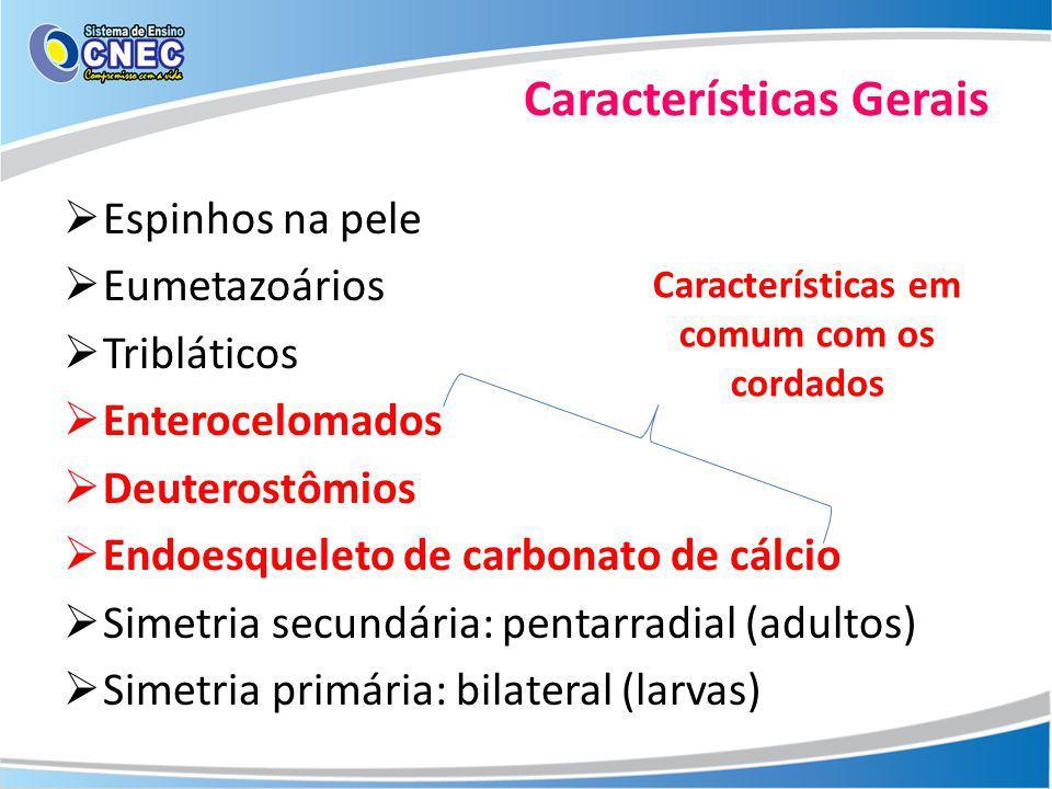 Sistema ambulacrário ou hidrovascular Locomoção, fixação, circulação, excreção e respiração