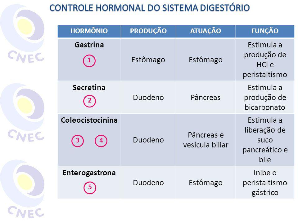 HORMÔNIOPRODUÇÃOATUAÇÃOFUNÇÃO Gastrina Estômago Estimula a produção de HCl e peristaltismo Secretina DuodenoPâncreas Estimula a produção de bicarbonat