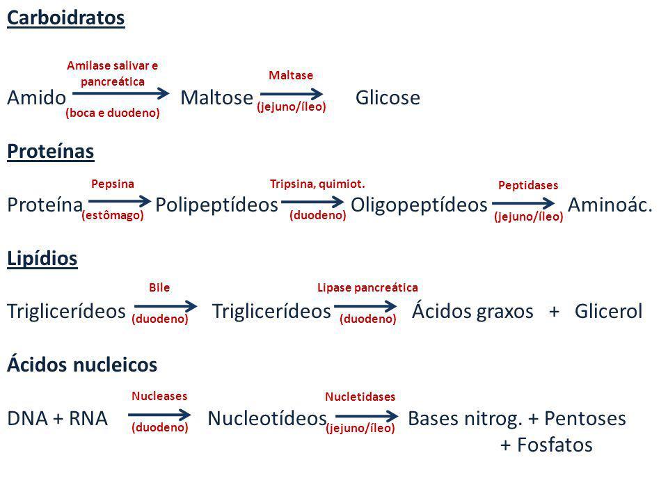 Carboidratos Amido Maltose Glicose Proteínas Proteína Polipeptídeos Oligopeptídeos Aminoác. Lipídios Triglicerídeos Triglicerídeos Ácidos graxos + Gli
