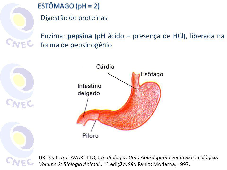 Digestão de proteínas Enzima: pepsina (pH ácido – presença de HCl), liberada na forma de pepsinogênio BRITO, E. A., FAVARETTO, J.A. Biologia: Uma Abor