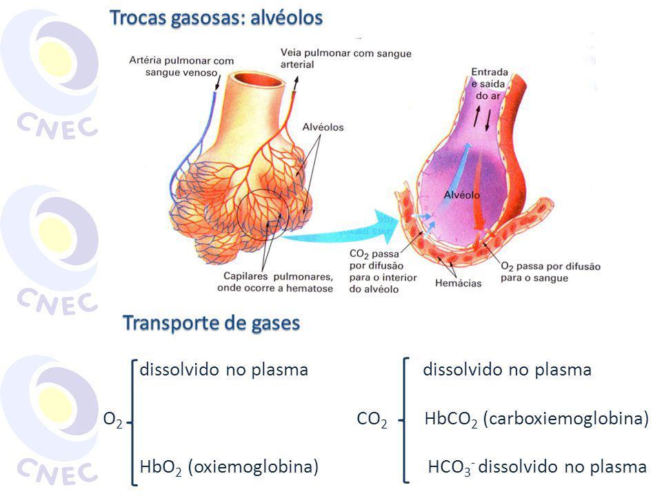 dissolvido no plasma dissolvido no plasma O 2 CO 2 HbCO 2 (carboxiemoglobina) HbO 2 (oxiemoglobina) HCO 3 - dissolvido no plasma