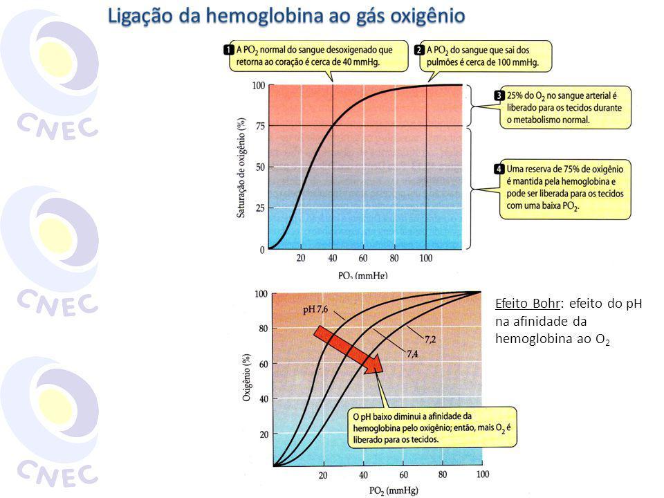 Efeito Bohr: efeito do pH na afinidade da hemoglobina ao O 2
