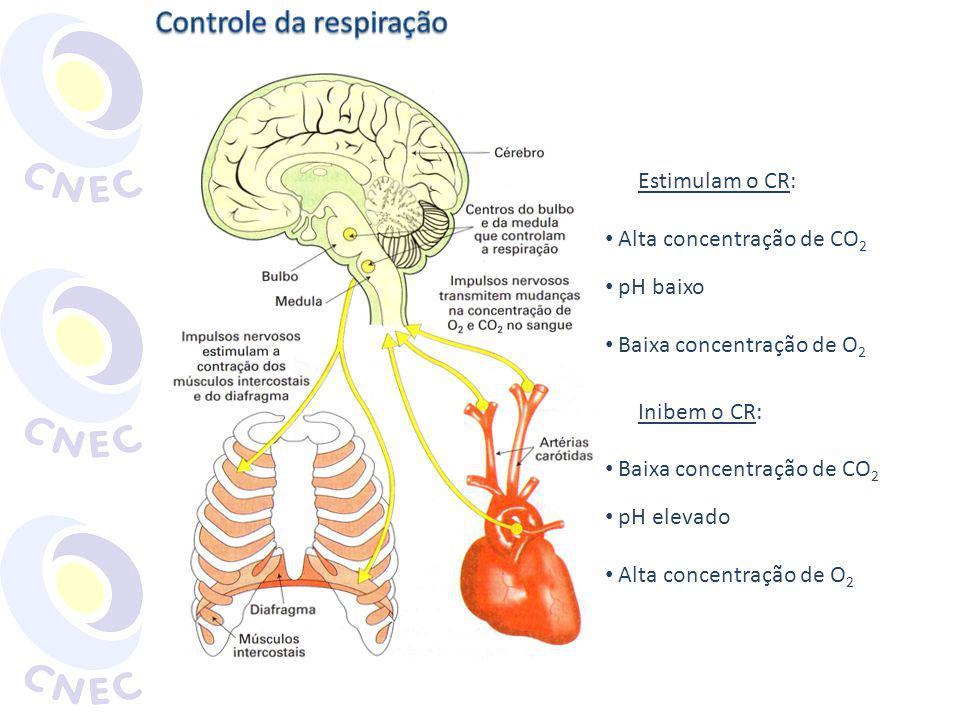 Estimulam o CR: Alta concentração de CO 2 pH baixo Baixa concentração de O 2 Inibem o CR: Baixa concentração de CO 2 pH elevado Alta concentração de O