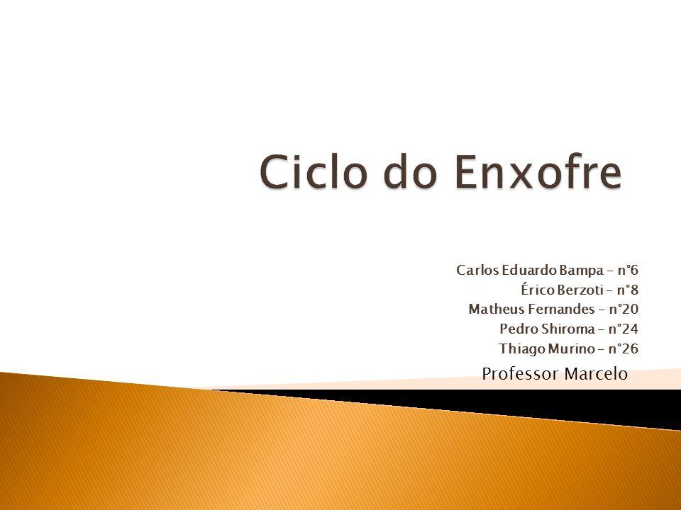 Carlos Eduardo Bampa – n°6 Érico Berzoti – n°8 Matheus Fernandes – n°20 Pedro Shiroma – n°24 Thiago Murino – n°26 Professor Marcelo