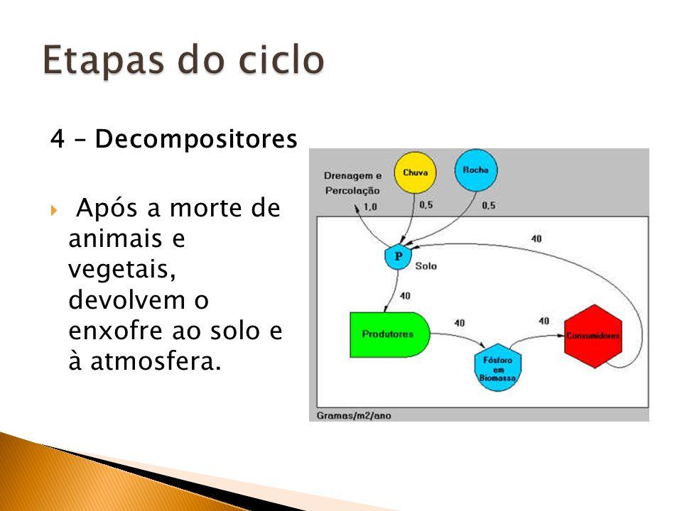 4 – Decompositores Após a morte de animais e vegetais, devolvem o enxofre ao solo e à atmosfera.