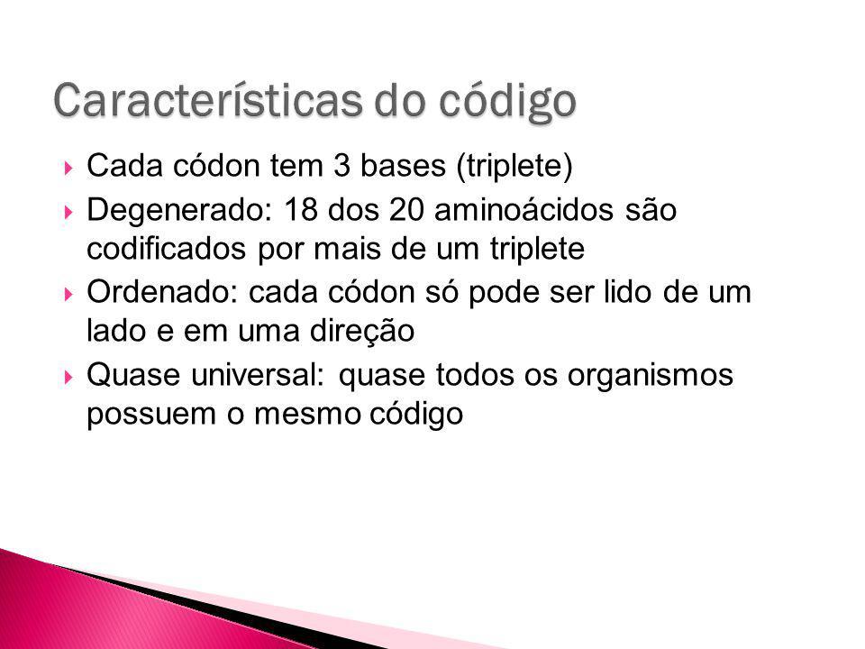 Cada códon tem 3 bases (triplete) Degenerado: 18 dos 20 aminoácidos são codificados por mais de um triplete Ordenado: cada códon só pode ser lido de um lado e em uma direção Quase universal: quase todos os organismos possuem o mesmo código