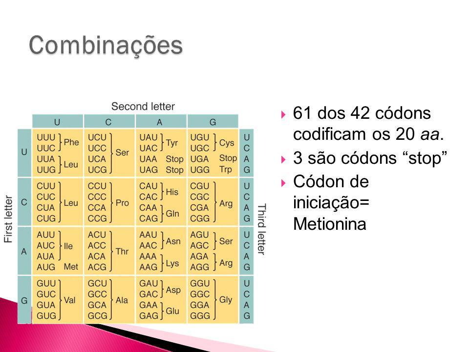 61 dos 42 códons codificam os 20 aa. 3 são códons stop Códon de iniciação= Metionina