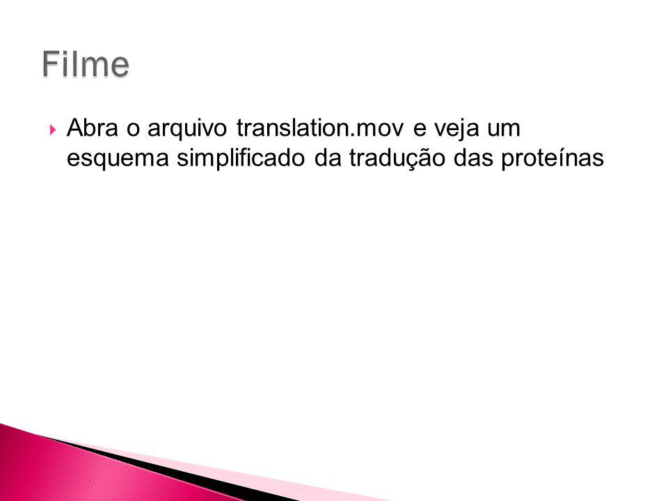 Abra o arquivo translation.mov e veja um esquema simplificado da tradução das proteínas