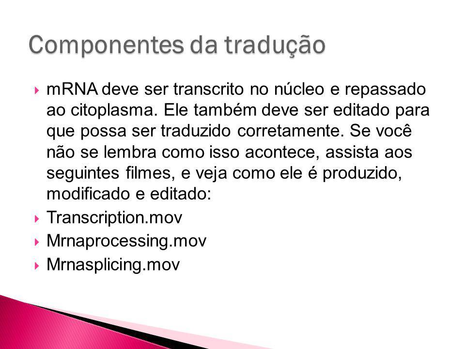 mRNA deve ser transcrito no núcleo e repassado ao citoplasma.