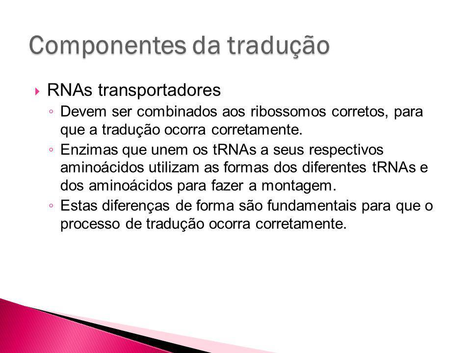 RNAs transportadores Devem ser combinados aos ribossomos corretos, para que a tradução ocorra corretamente.