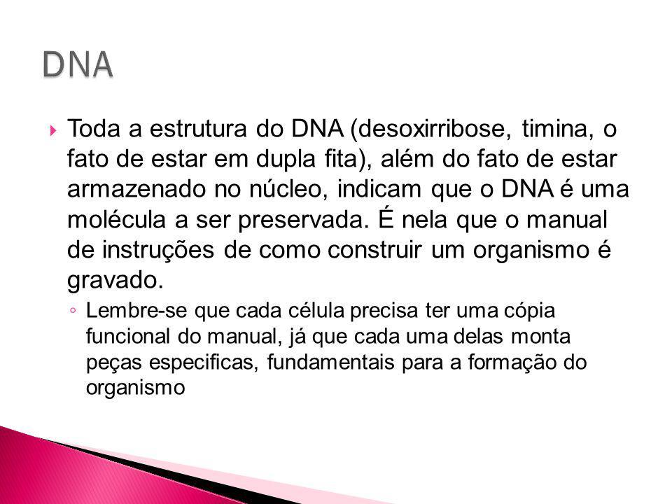 Toda a estrutura do DNA (desoxirribose, timina, o fato de estar em dupla fita), além do fato de estar armazenado no núcleo, indicam que o DNA é uma molécula a ser preservada.