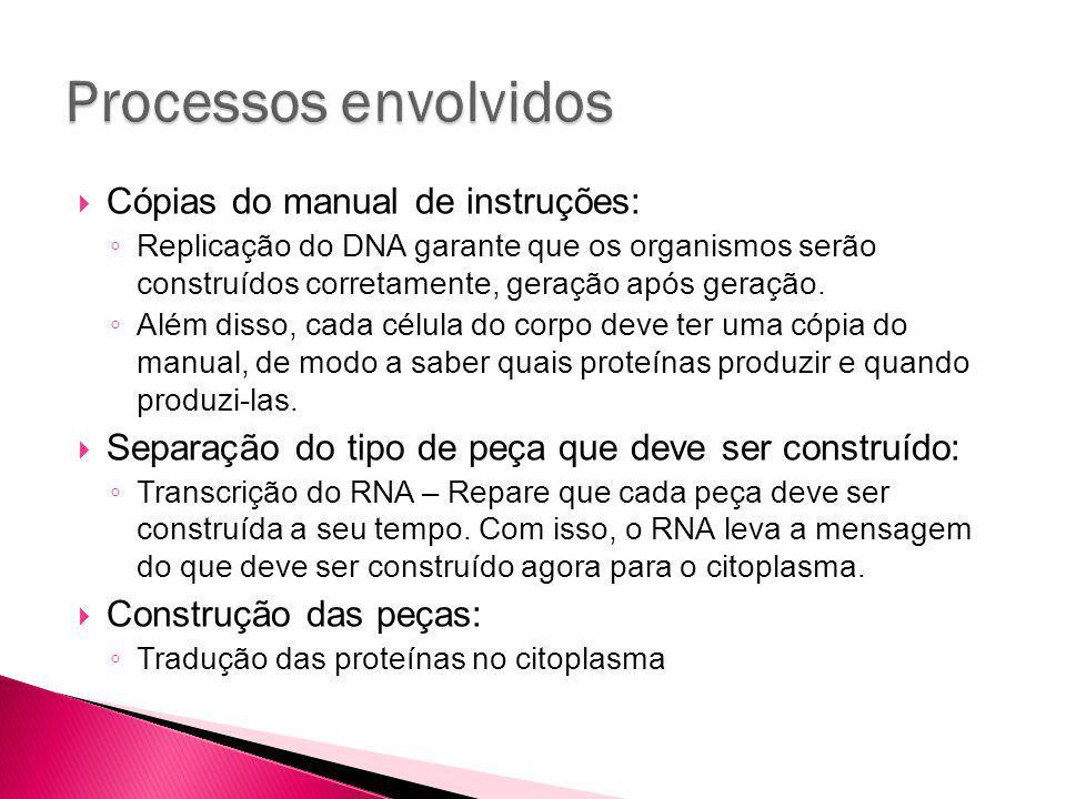 Cópias do manual de instruções: Replicação do DNA garante que os organismos serão construídos corretamente, geração após geração.