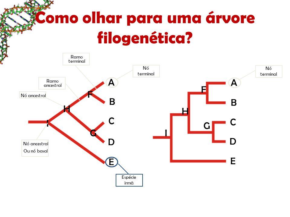 Como olhar para uma árvore filogenética? A B C D E F G H I B C D E F H G I Nó terminal A Ramo terminal Ramo ancestral Nó ancestral Ou nó basal Espécie