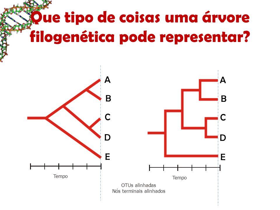 Que tipo de coisas uma árvore filogenética pode representar? Tempo A B C D E OTUs alinhadas Nós terminais alinhados A B C D E