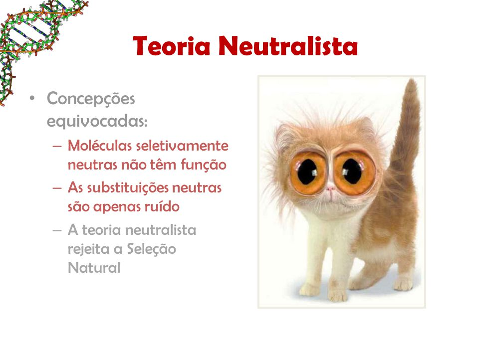 Teoria Neutralista Concepções equivocadas: – Moléculas seletivamente neutras não têm função – As substituições neutras são apenas ruído – A teoria neu