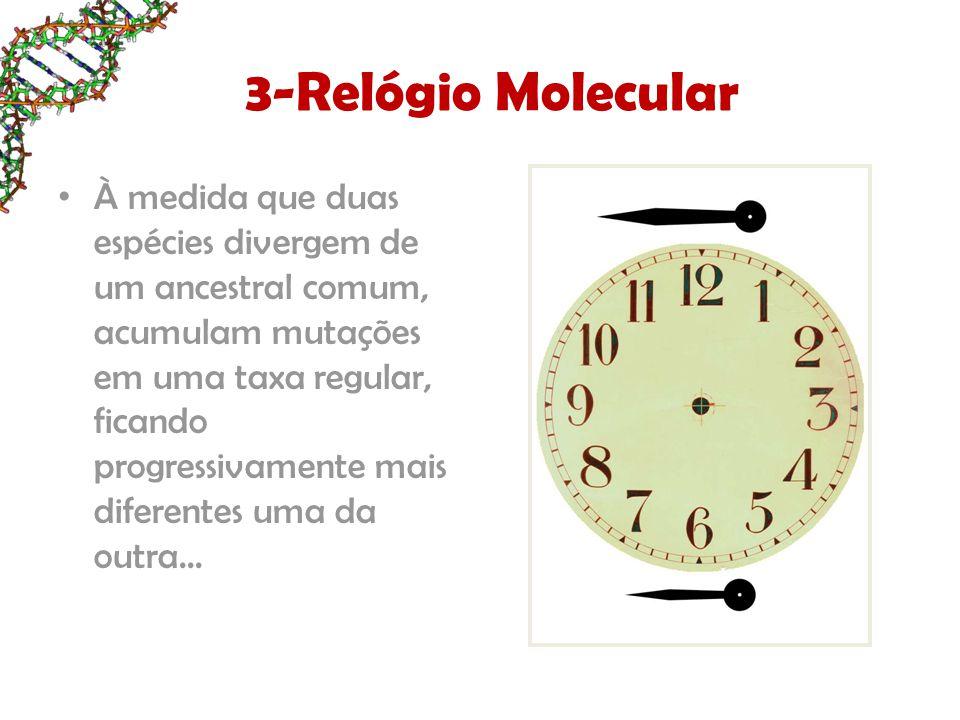 3-Relógio Molecular À medida que duas espécies divergem de um ancestral comum, acumulam mutações em uma taxa regular, ficando progressivamente mais di