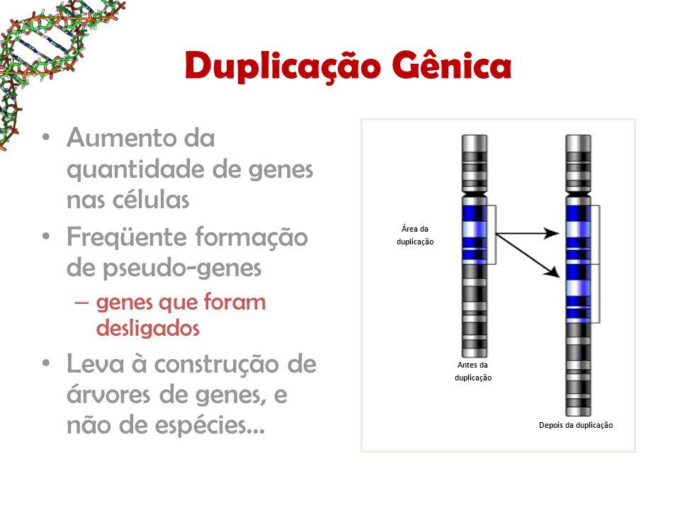 Duplicação Gênica Aumento da quantidade de genes nas células Freqüente formação de pseudo-genes – genes que foram desligados Leva à construção de árvo