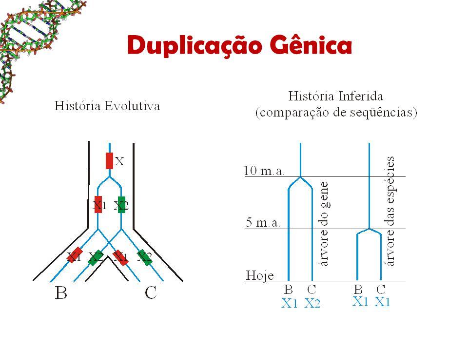 Duplicação Gênica