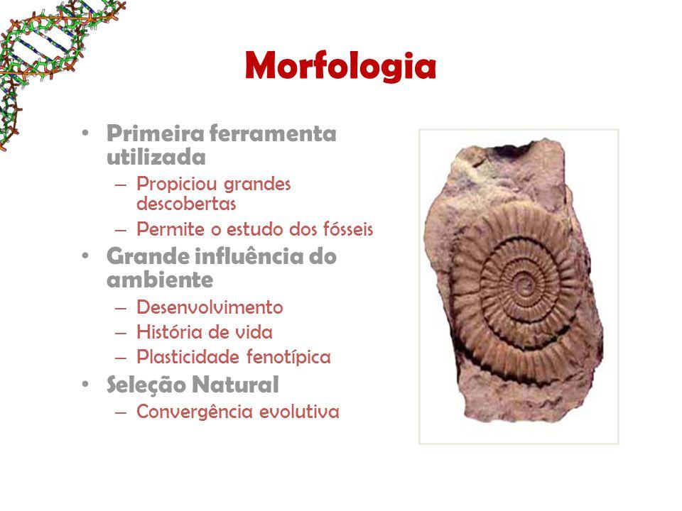 Morfologia Primeira ferramenta utilizada – Propiciou grandes descobertas – Permite o estudo dos fósseis Grande influência do ambiente – Desenvolvimento – História de vida – Plasticidade fenotípica Seleção Natural – Convergência evolutiva