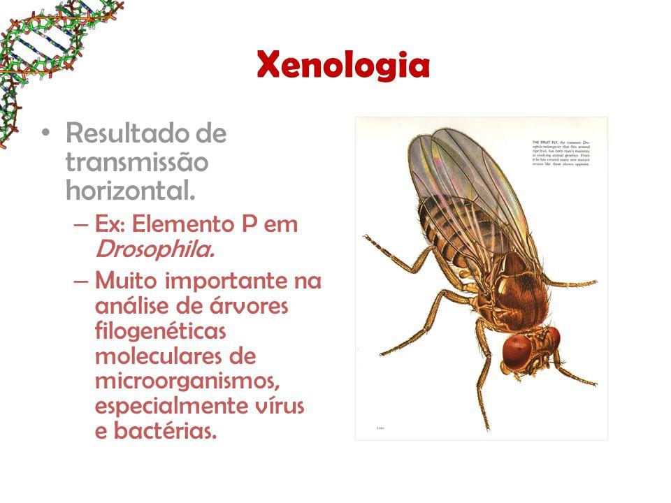 Xenologia Resultado de transmissão horizontal. – Ex: Elemento P em Drosophila.