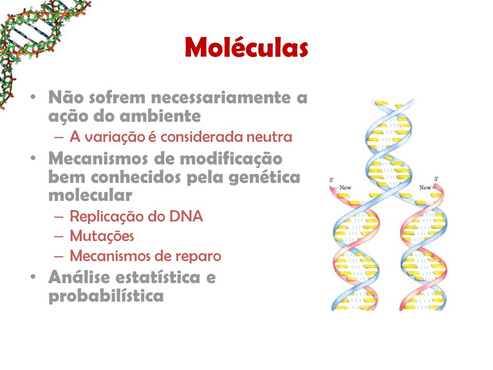 Moléculas Não sofrem necessariamente a ação do ambiente – A variação é considerada neutra Mecanismos de modificação bem conhecidos pela genética molecular – Replicação do DNA – Mutações – Mecanismos de reparo Análise estatística e probabilística