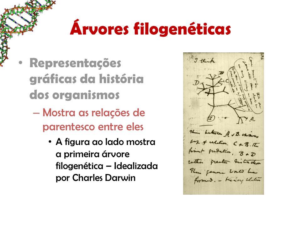 Árvores filogenéticas Representações gráficas da história dos organismos – Mostra as relações de parentesco entre eles A figura ao lado mostra a primeira árvore filogenética – Idealizada por Charles Darwin