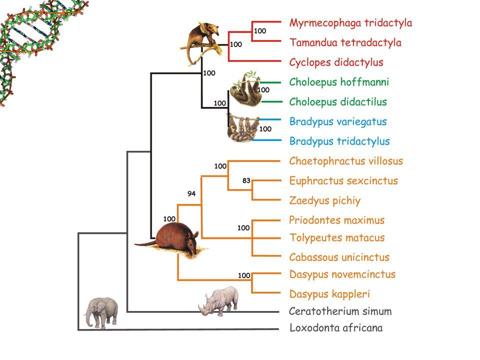 Xenologia Resultado de transmissão horizontal.– Ex: Elemento P em Drosophila.