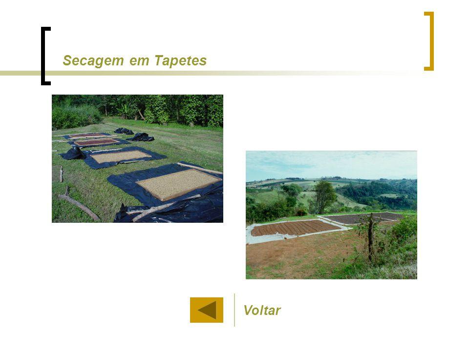 Voltar Secagem em Tapetes