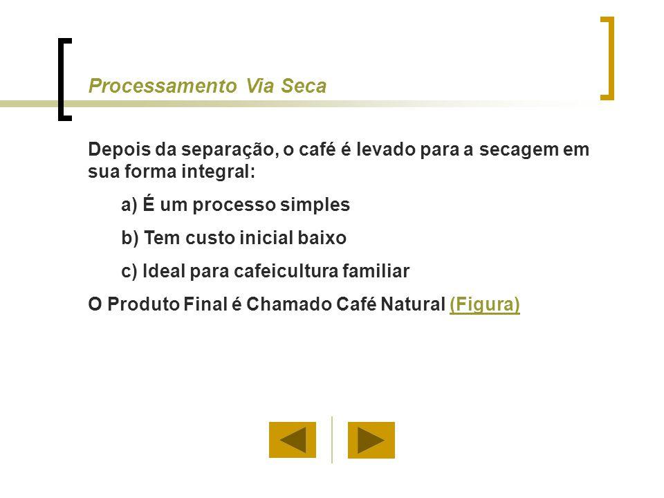 Processamento Via Seca Depois da separação, o café é levado para a secagem em sua forma integral: a) É um processo simples b) Tem custo inicial baixo