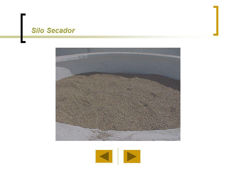 Seca-Aeração No processo de seca-aeração estão envolvidos alta temperatura de secagem e aeração do produto.