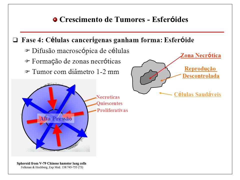 Crescimento de Tumores - Esfer ó ides Fase 4: C é lulas cancer í genas ganham forma: Esfer ó ide Difusão macrosc ó pica de c é lulas Forma ç ão de zonas necr ó ticas Tumor com diâmetro 1-2 mm Zona Necr ó tica Reprodução Descontrolada C é lulas Saud á veis Necroticas Quiescentes Proliferativas Alta Pressão