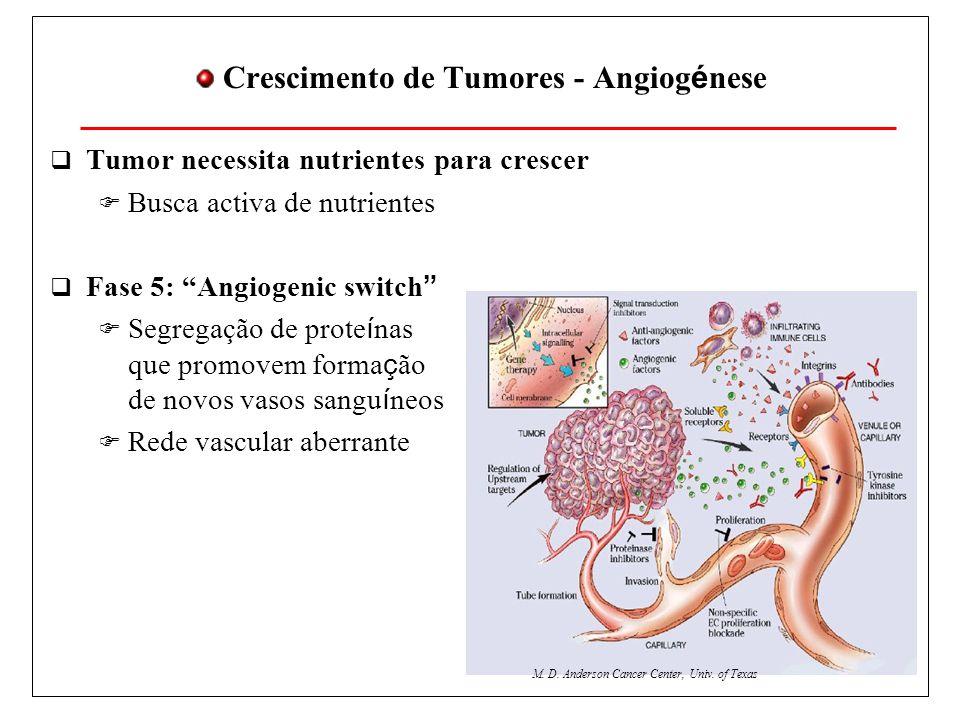 Crescimento de Tumores - Angiog é nese Tumor necessita nutrientes para crescer Busca activa de nutrientes Fase 5: Angiogenic switch Segregação de prote í nas que promovem forma ç ão de novos vasos sangu í neos Rede vascular aberrante M.