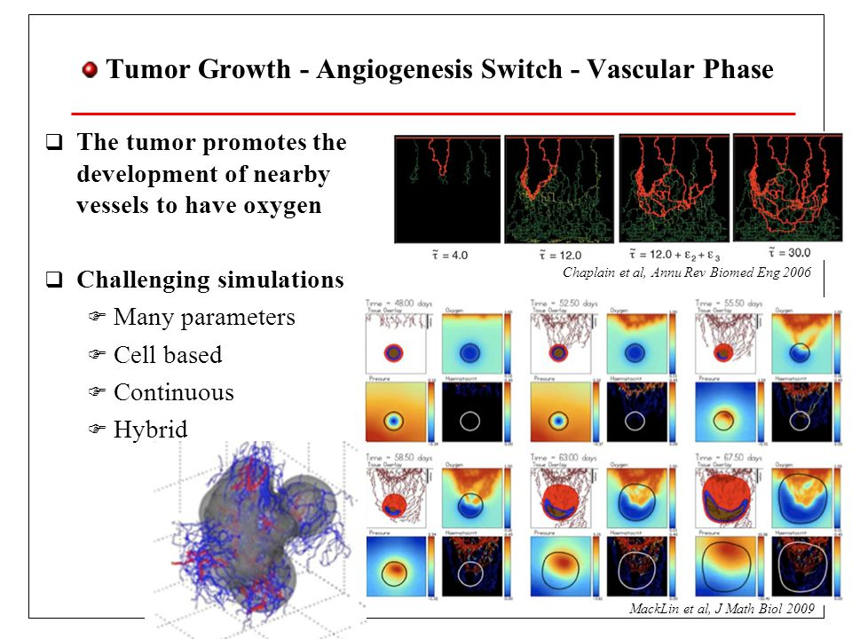 Tumor Growth - Angiogenesis Switch - Vascular Phase The tumor promotes the development of nearby vessels to have oxygen Challenging simulations Many parameters Cell based Continuous Hybrid MackLin et al, J Math Biol 2009 Chaplain et al, Annu Rev Biomed Eng 2006
