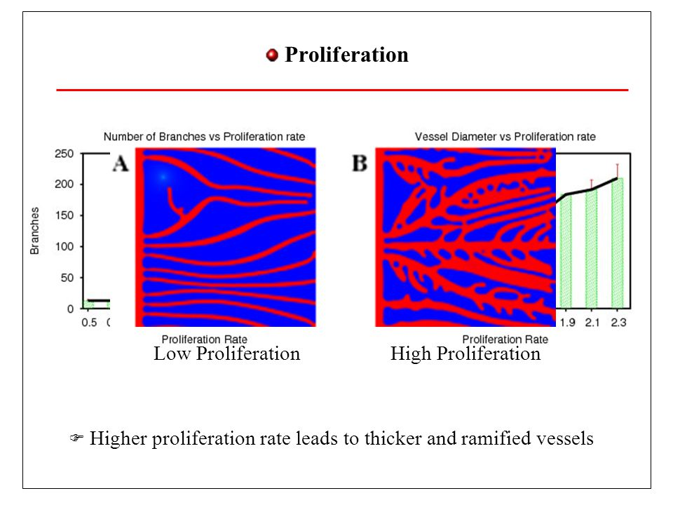 Proliferation Higher proliferation rate leads to thicker and ramified vessels Low ProliferationHigh Proliferation