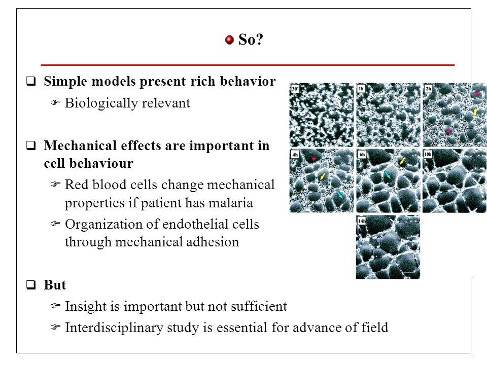 So? Simple models present rich behavior Biologically relevant Mechanical effects are important in cell behaviour Red blood cells change mechanical pro