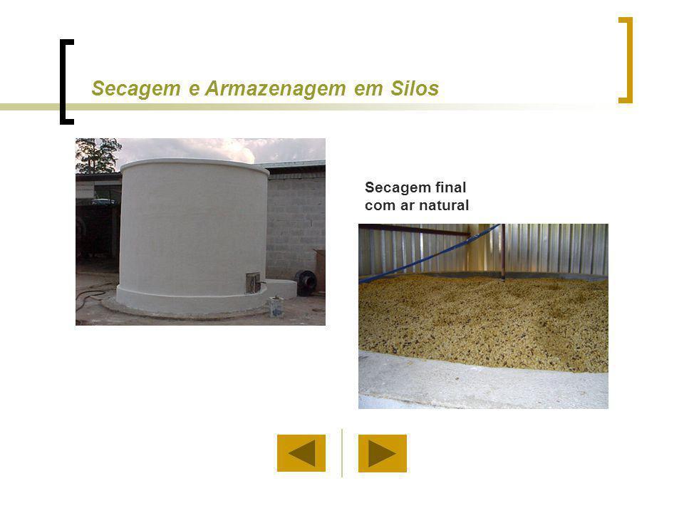 Após a secagem, o café permanece armazenado no próprio silo. Secagem e Armazenagem em Silos