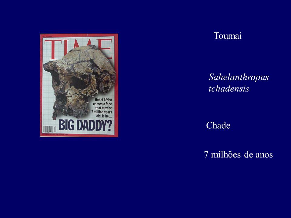 Toumai Sahelanthropus tchadensis Chade 7 milhões de anos