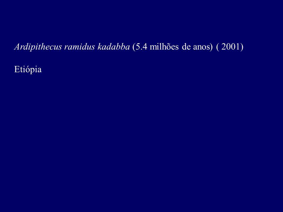 Ardipithecus ramidus kadabba (5.4 milhões de anos) ( 2001) Etiópia