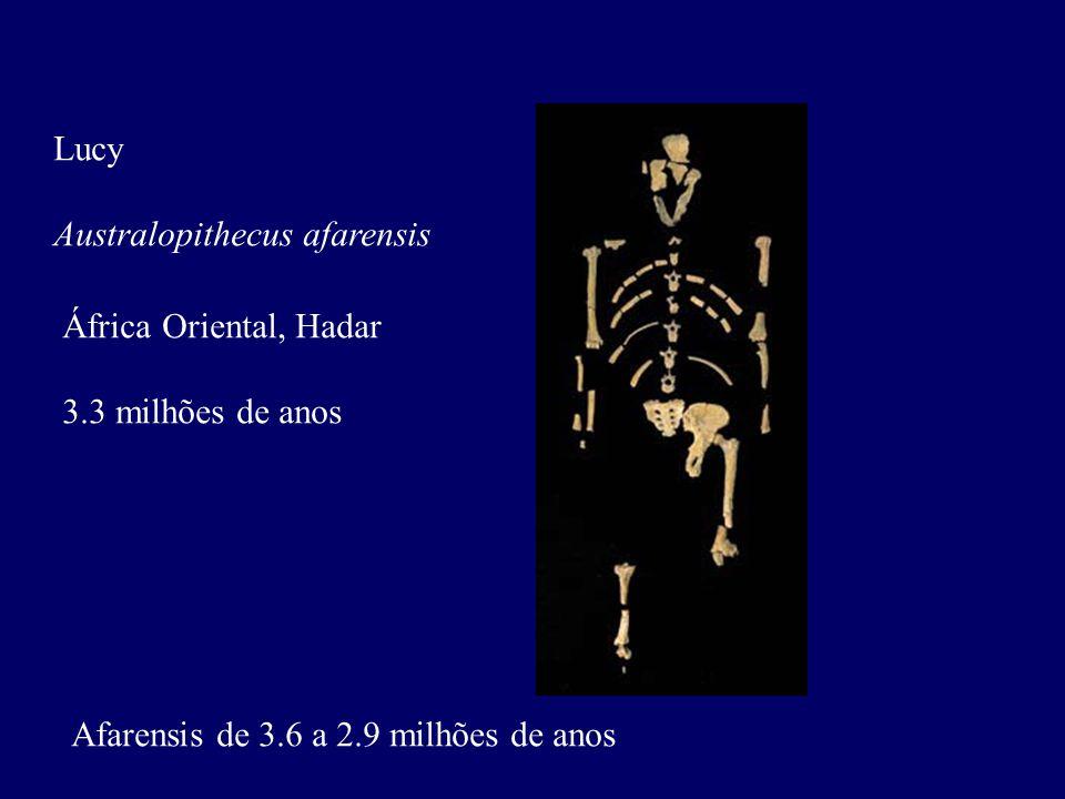 Lucy Australopithecus afarensis África Oriental, Hadar 3.3 milhões de anos Afarensis de 3.6 a 2.9 milhões de anos
