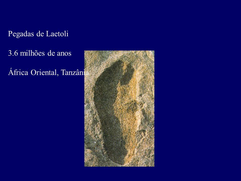 Pegadas de Laetoli 3.6 milhões de anos África Oriental, Tanzânia