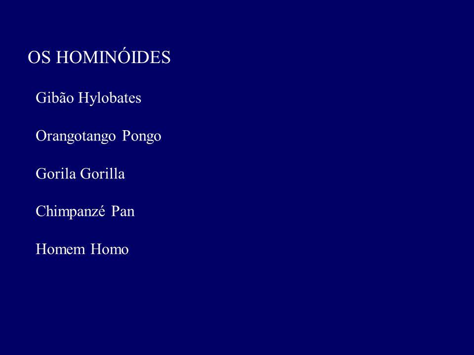 OS HOMINÓIDES Gibão Hylobates Orangotango Pongo Gorila Gorilla Chimpanzé Pan Homem Homo