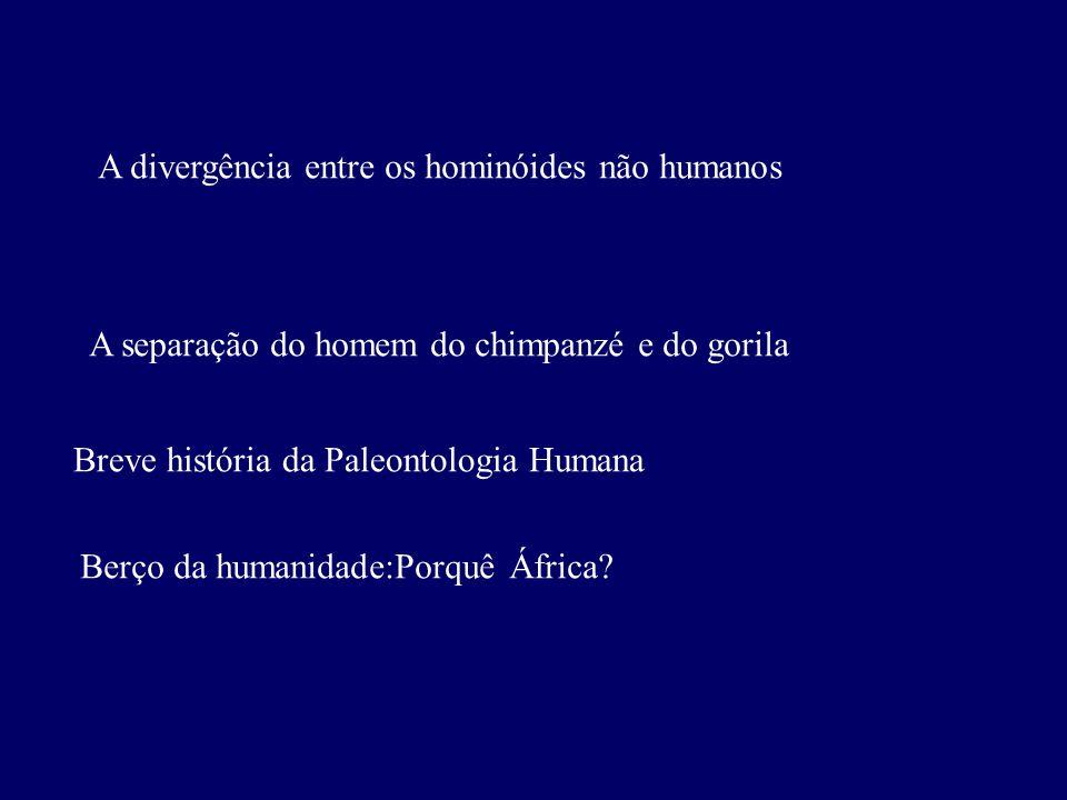 A divergência entre os hominóides não humanos A separação do homem do chimpanzé e do gorila Berço da humanidade:Porquê África.