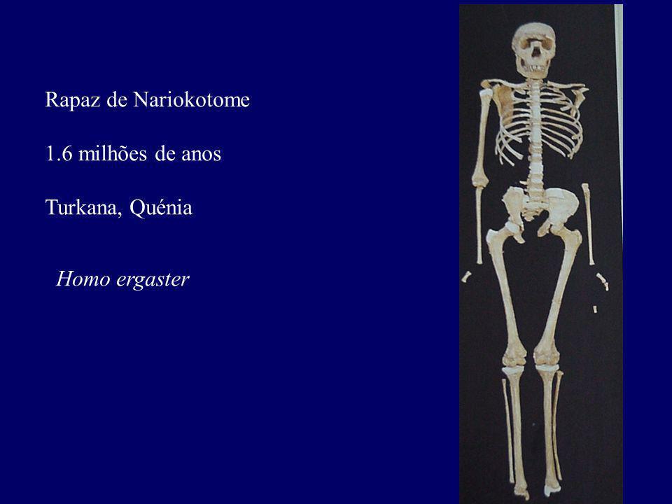 Rapaz de Nariokotome 1.6 milhões de anos Turkana, Quénia Homo ergaster
