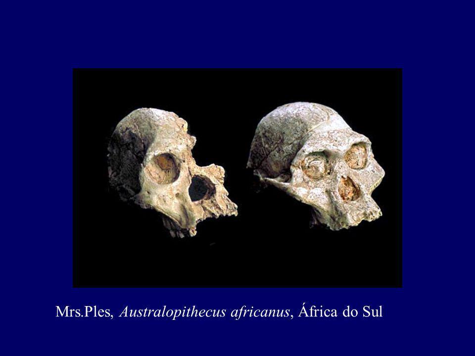 Mrs.Ples, Australopithecus africanus, África do Sul