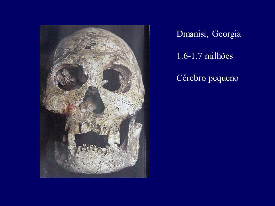 Dmanisi, Georgia 1.6-1.7 milhões Cérebro pequeno