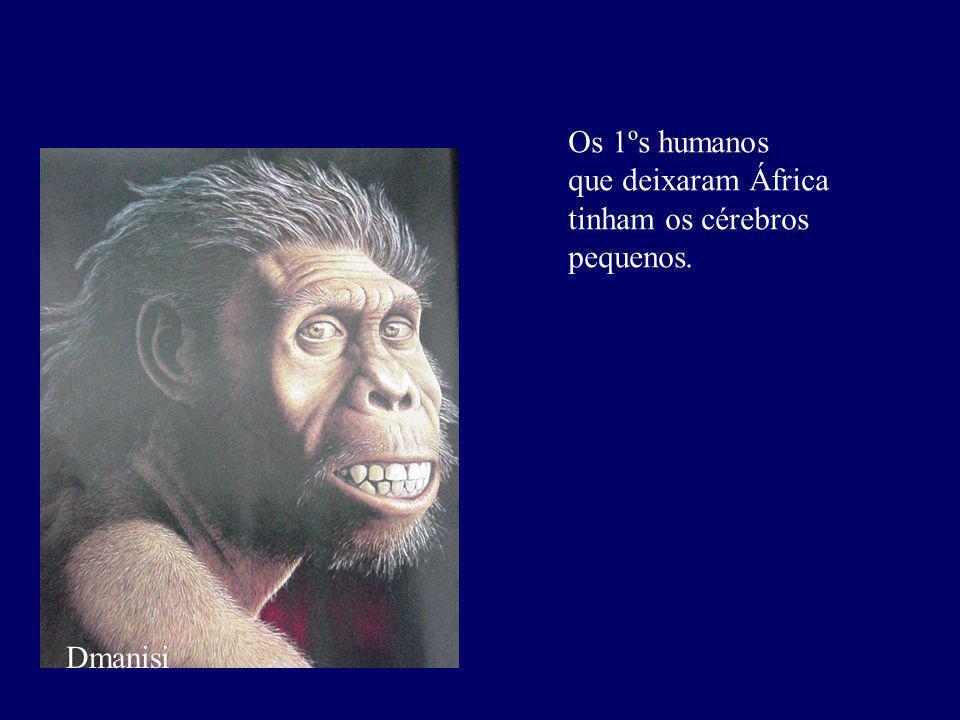 Dmanisi Os 1ºs humanos que deixaram África tinham os cérebros pequenos.