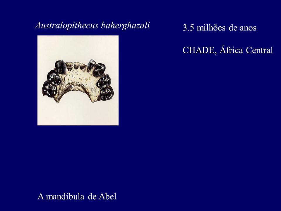 Australopithecus baherghazali 3.5 milhões de anos CHADE, África Central A mandíbula de Abel