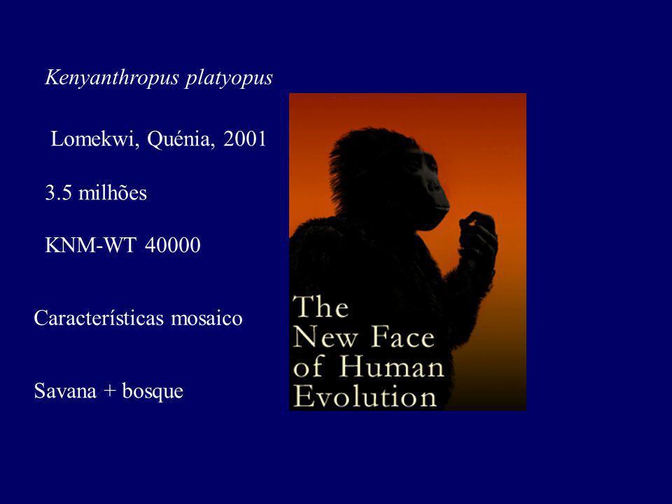 Kenyanthropus platyopus Lomekwi, Quénia, 2001 3.5 milhões KNM-WT 40000 Características mosaico Savana + bosque