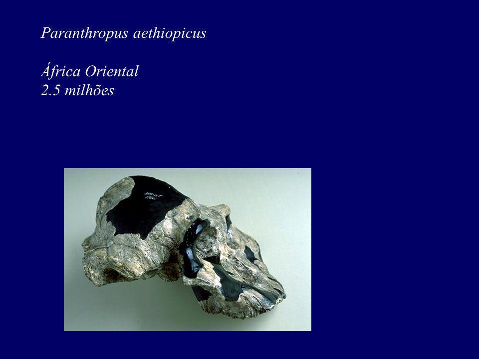 Paranthropus aethiopicus África Oriental 2.5 milhões