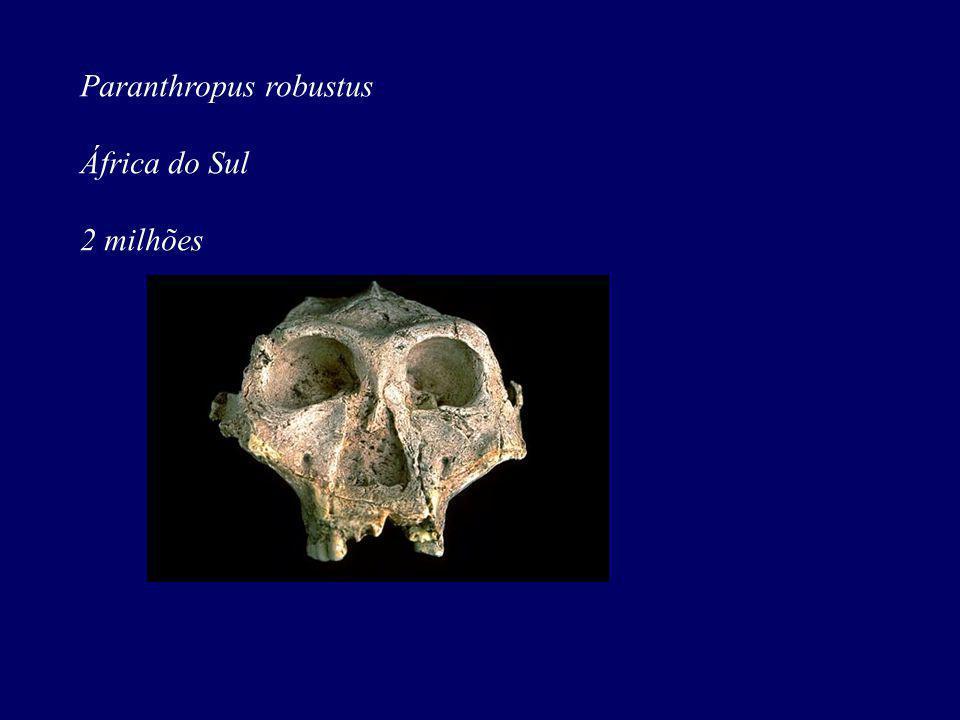 Paranthropus robustus África do Sul 2 milhões